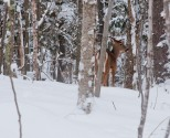 At Mont Tremblant fun is not only hitting the slopes. Just as I was finish the ski run for the day, I ran into a couple of deers wondering around the woods. I was fortunate to get close to one of them. What a treat to wrap up the weekend.